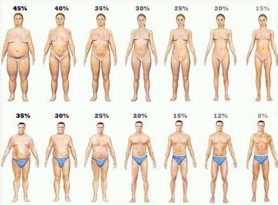 Fat Percentage of Body