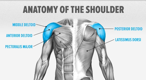 anatomy-shoulder